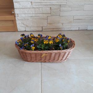 pruteny truhlik, kos na kvety